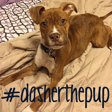 dasherthepup